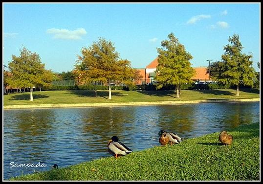 pond_small.jpg