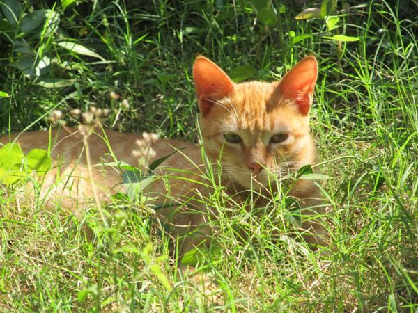 Cat in the grass.JPG