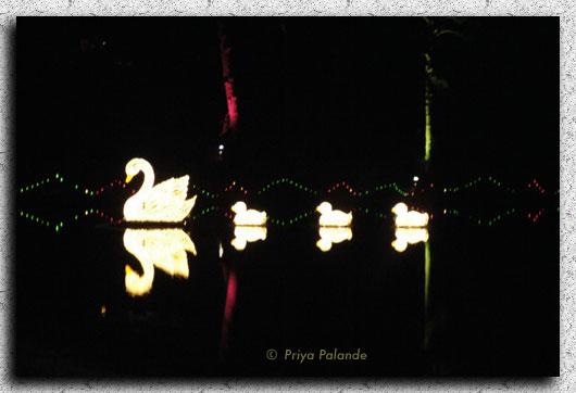 duck_reflection.jpg