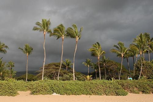 8. Maui - beach.jpg