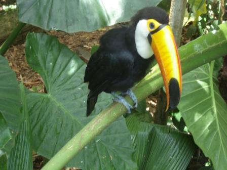 brazilian bird.JPG