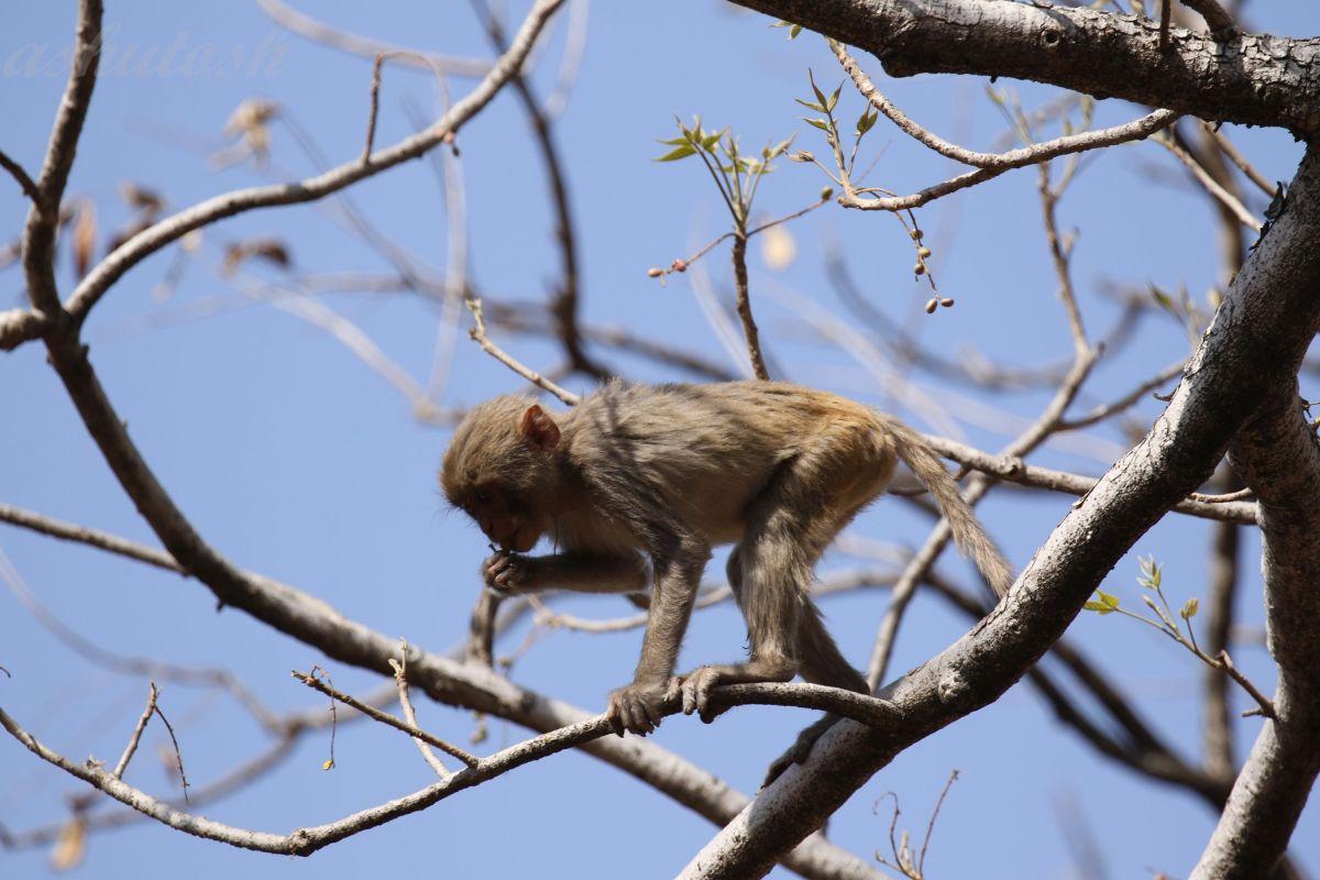 Monkey RS.jpg