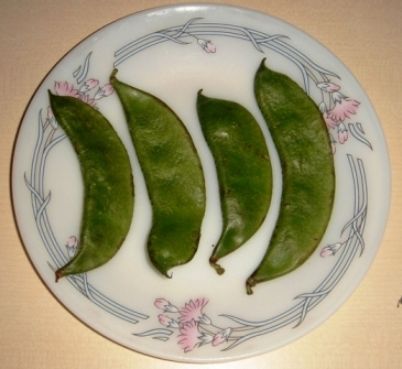 sim-indian-beans.jpg