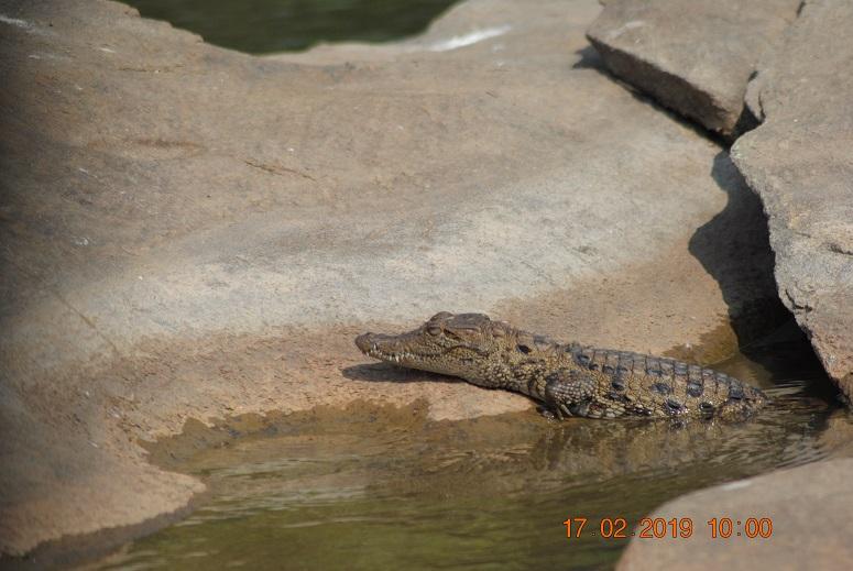 croc_baby.jpg