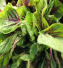 leaf_0543.jpg