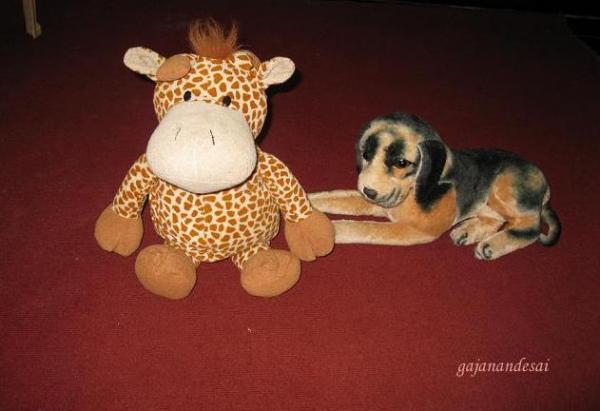 giraffe_kuku.JPG