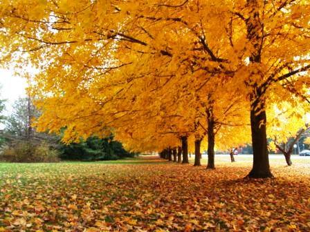 Fall2007_2Web.jpg