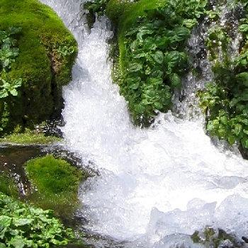 Water_spring_350.jpg