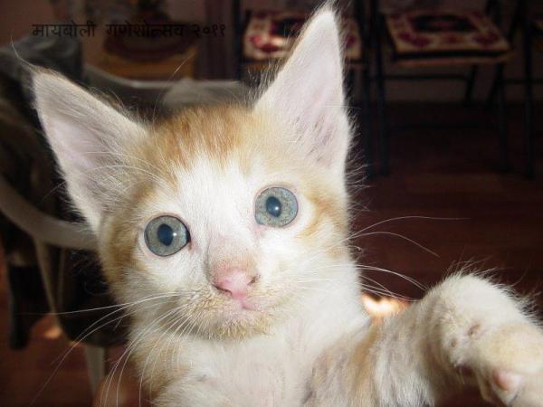 meow2.jpg