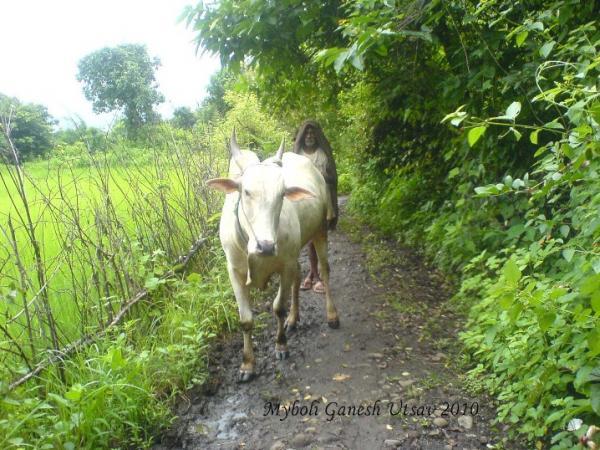 prachi_aadhar_entry_rohit ek mavala.jpg
