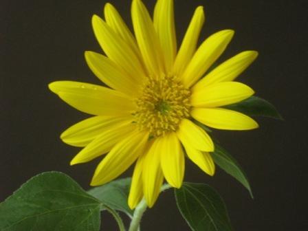 zabbu_flower_macro.JPG