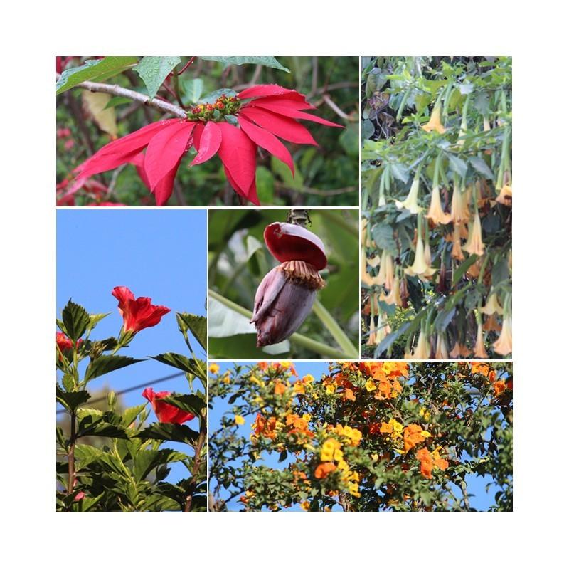 flowers_original (1).jpg