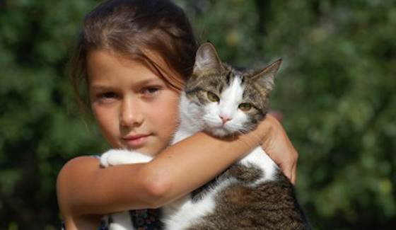 Cats-Best-Cat-Breeds-for-Kids-Daily-Cat.jpg