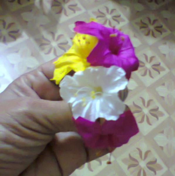 3 Colour Gulabakshi.jpg