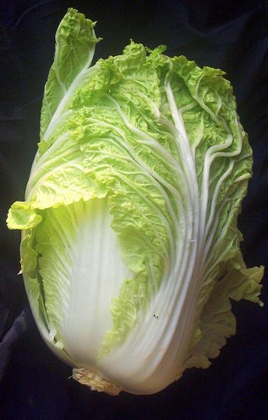 napa cabbage.jpg