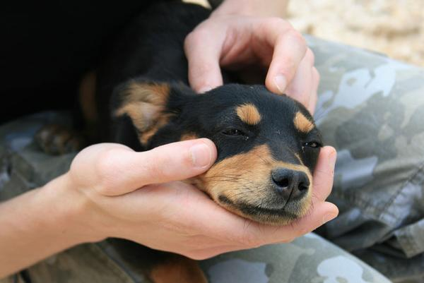 800px-Puppy_near_Coltani_-_17_apr_2010.jpg