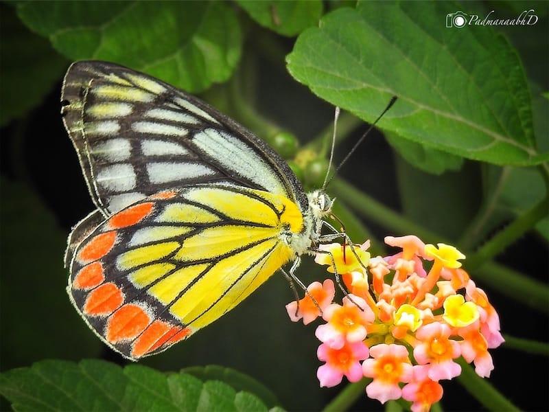 ३ फुलपाखरु.jpg