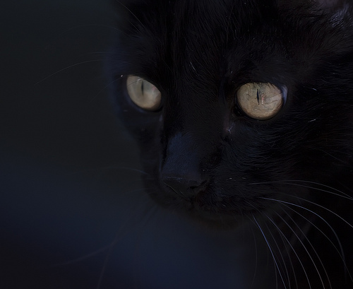 cat scary.jpg