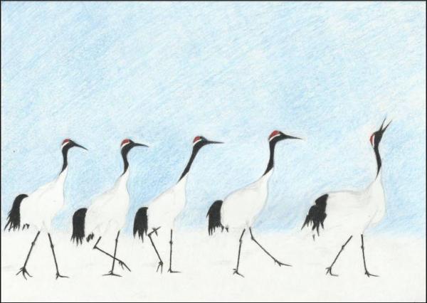 Japanese cranes 48k.jpg