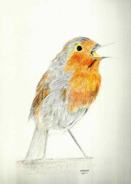 Robin30kb.jpg