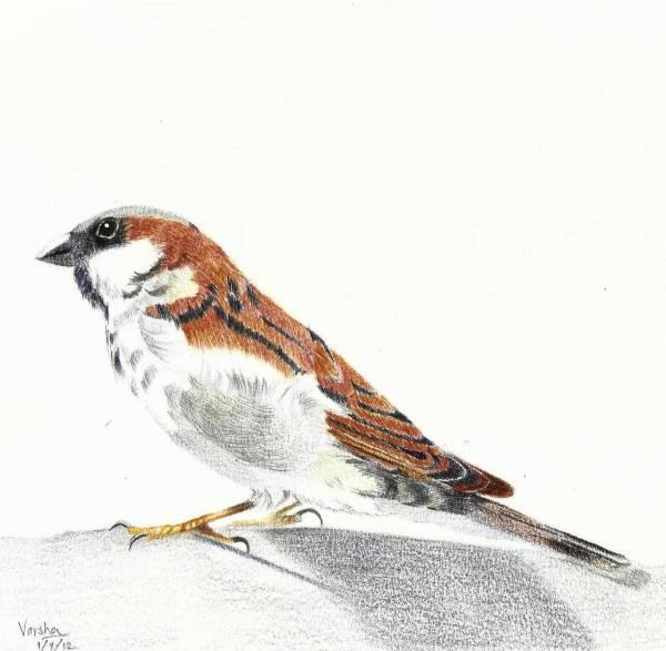 Sparrow 35k.jpg