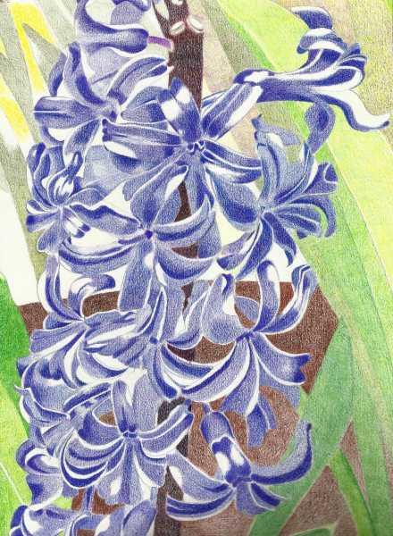 blue hyacinth 52k.jpeg