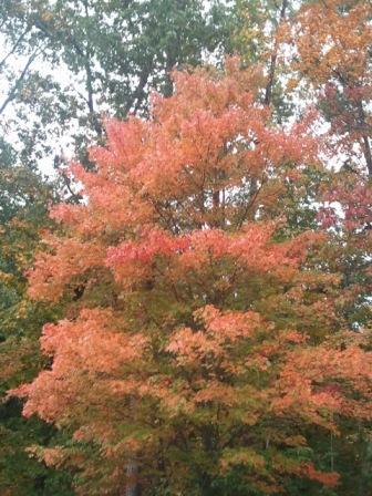 2010-10-26 09.22.06.jpg