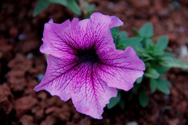 Flower 14.JPG