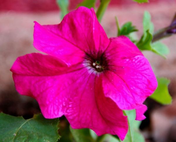 Flower 16.JPG