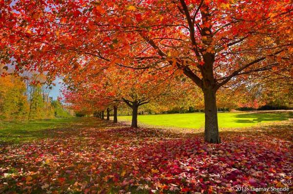 Fall_2013_1.jpg