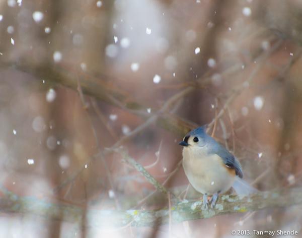 Snow_2014_1.jpg