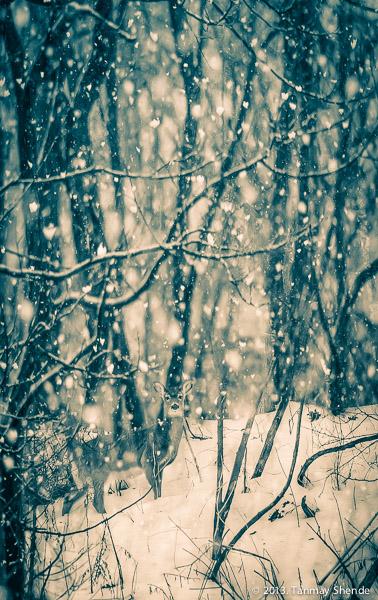 Snow_2014_2.jpg