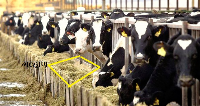 Dairy-Expo-Proseeds.jpg