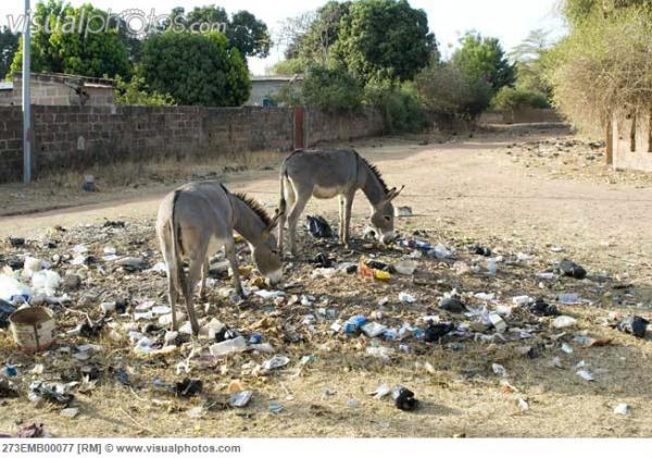jerusalem_donkeys_eating_among_the_trash_on_a_street_in_banfora_burkina_faso_273EMB00077.jpg