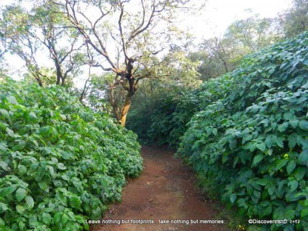 08Vajantri_KaulyaDhar_DiscoverSahyadri.jpg