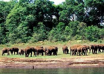 1356170014Periyar Wildlife Sanctuary Kerala.jpg