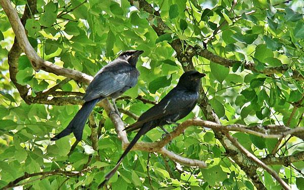 bandipur-wildlife-sanctuary-birds.jpg