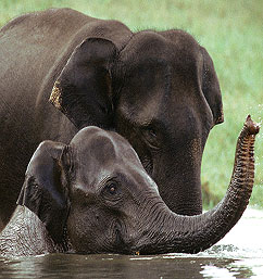 kerala-wildlife-tour-big.jpg