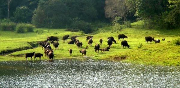 wildlife-kerala (1).jpg