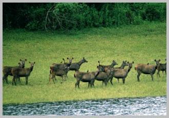 wildlife-kerala.jpg