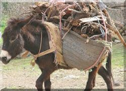 dONKEY WITH 100KGS LOAD.jpg