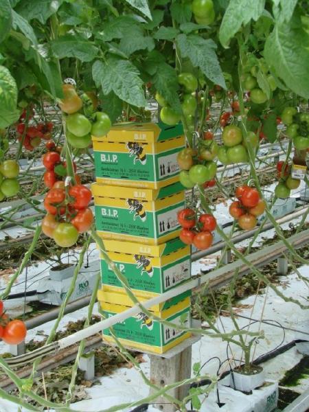 Farm_Bees.jpg
