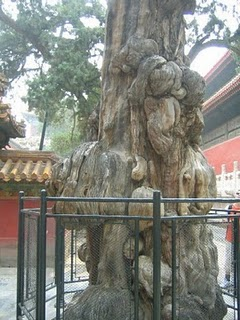 China 096.jpg