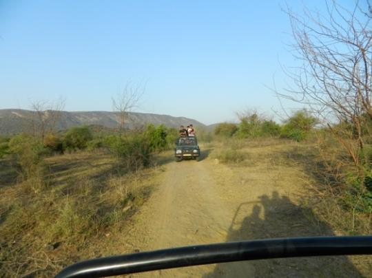jipsi safari.jpg