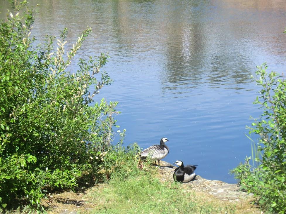Pond & Duck.JPG