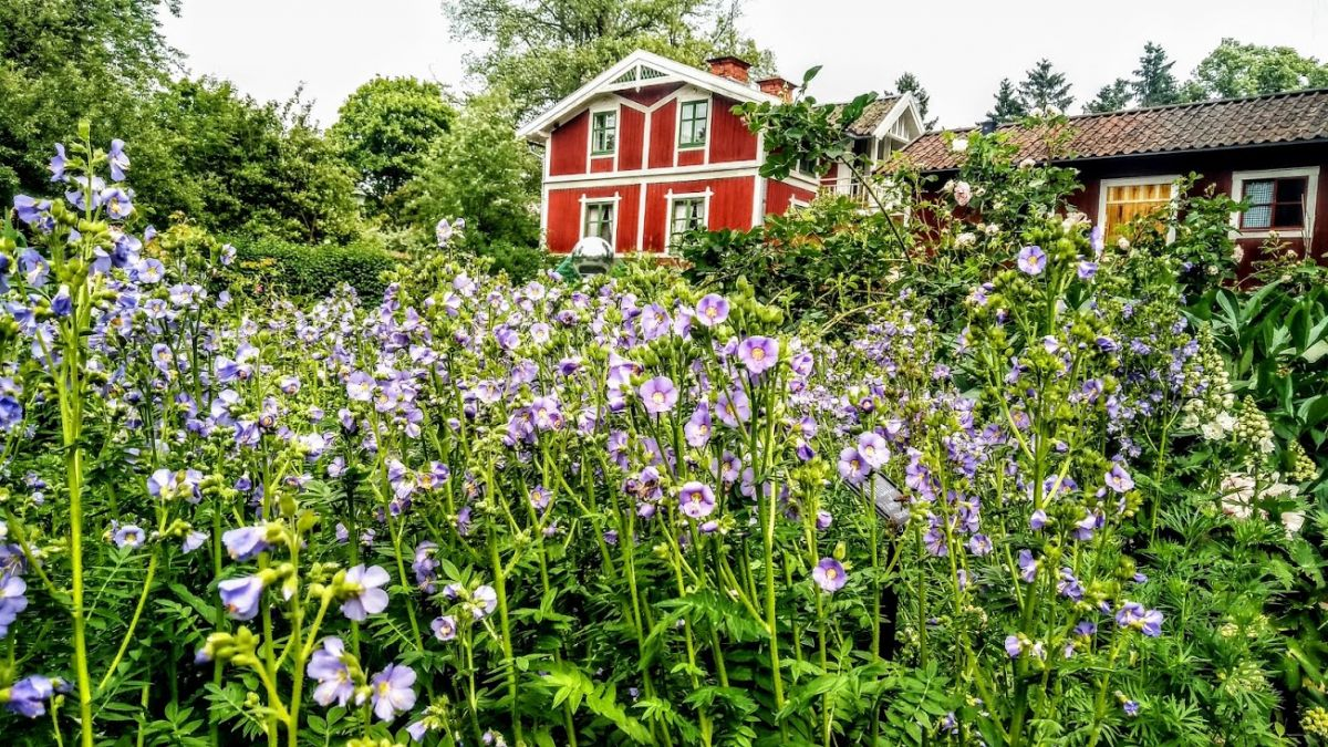 Skansen Garden.jpg