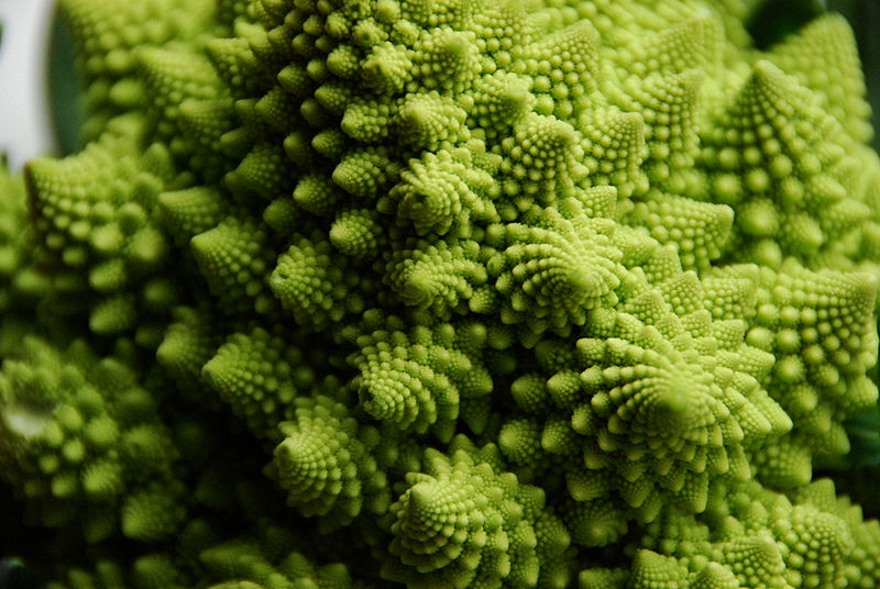 800px-Flickr_-_cyclonebill_-_Romanesco.jpg
