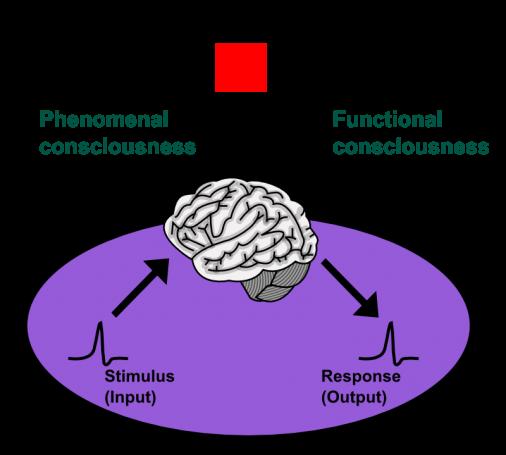consciousness_phenomenal-functional_en-506x455.png