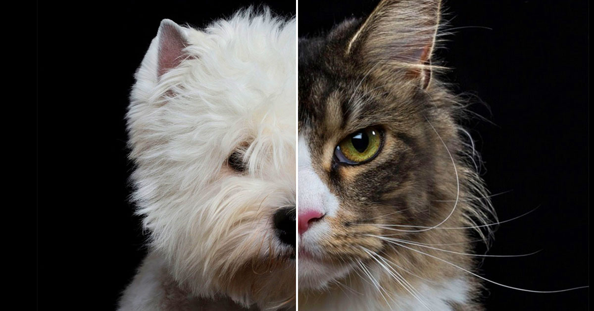 Everyone-Is-A-Combo-Of-One-Dog-Breed-And-One-Cat-Breed.jpg
