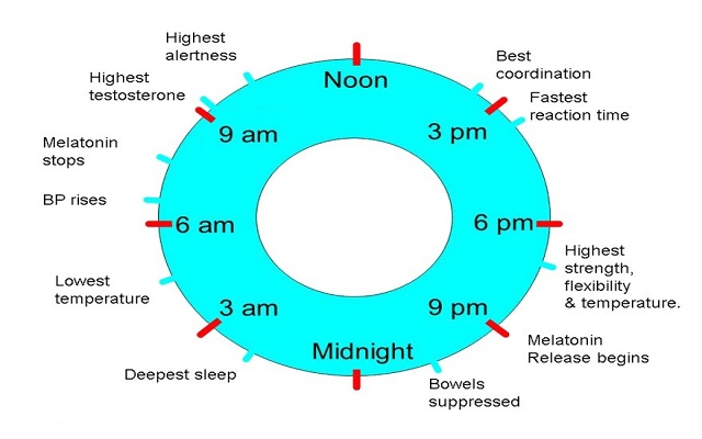 circadian-rythms.jpg